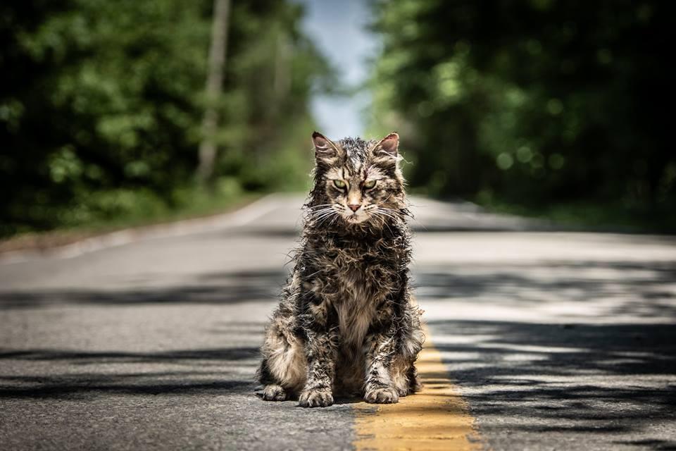 Friedhof der Kuscheltiere Katze